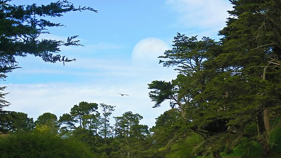 Full Moon in Golden Gate Park by David Denny