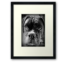 Oh Please... Let It Rain Cookies ~ Boxer Dog Series ~ Framed Print