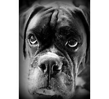 Oh Please... Let It Rain Cookies ~ Boxer Dog Series ~ Photographic Print