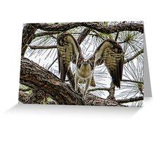 Osprey Eyes Greeting Card