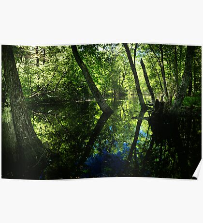 Along the Swamp Shore Poster