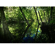 Along the Swamp Shore Photographic Print