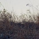 winter sunset grass by ionclad