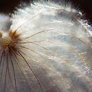 gossamer flower II by ionclad