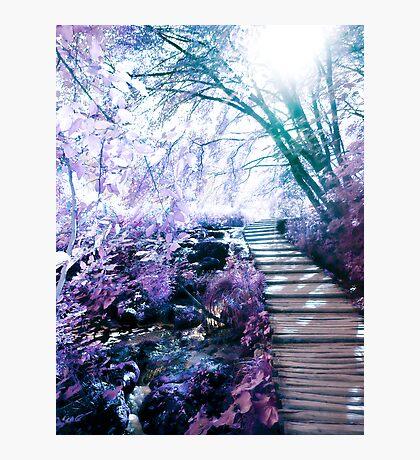 enchanting path Photographic Print