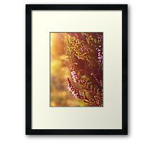 Purple Heather Framed Print