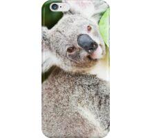 Koala by itself in a tree. iPhone Case/Skin