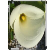 Overhead Shot of A Cream Calla Lily In Soft Focus iPad Case/Skin