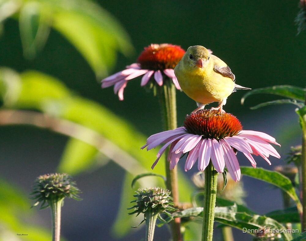 Enjoying the flowers by Dennis Cheeseman