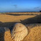 Lonely Shell by Susan Zohn