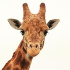 Friendly Giraffe  by xxkellywxx