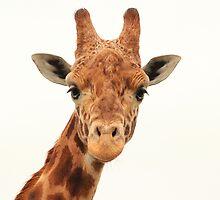 Friendly Giraffe  by xxkellywxx