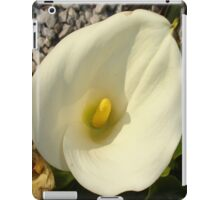 Single Cream White Calla Lily With Garden Background iPad Case/Skin