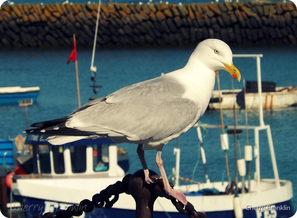 Herring Gull by Cherry Franklin