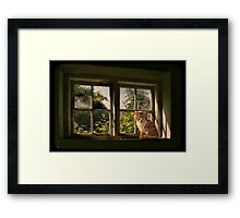 Lazing on a sunny afternoon Framed Print