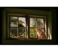 Lazing on a sunny afternoon Photographic Print