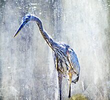 Great Blue Heron - Ardea herodias by MotherNature2