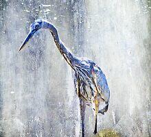 Great Blue Heron - Ardea herodias by MotherNature2