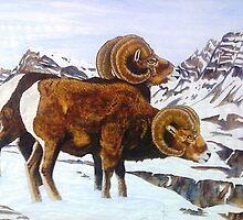 Colorado Bighorns by Doug Hiser