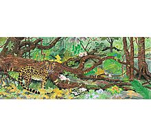 Margay Amazonia spotted cat Photographic Print