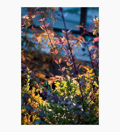 Multi coloured leaves Photographic Print