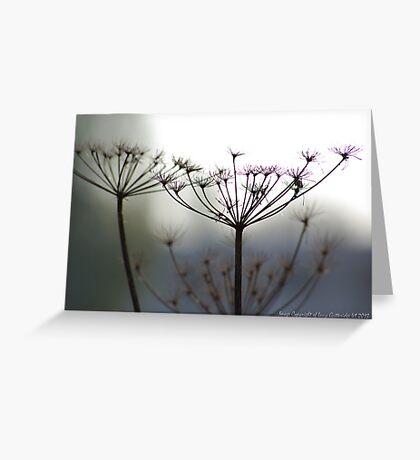 Field Flower Greeting Card