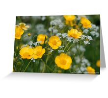 Meadow Buttercups Greeting Card