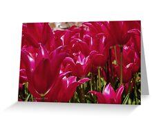 Spring Sensation Greeting Card