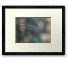 Spider Spider Framed Print