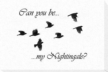On Hold) - Chapter Six: Can You Be My Nightingale? - Page 1 - Wattpad