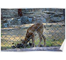 born in captivity Poster