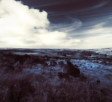 Winter Blues by Jamie Nield