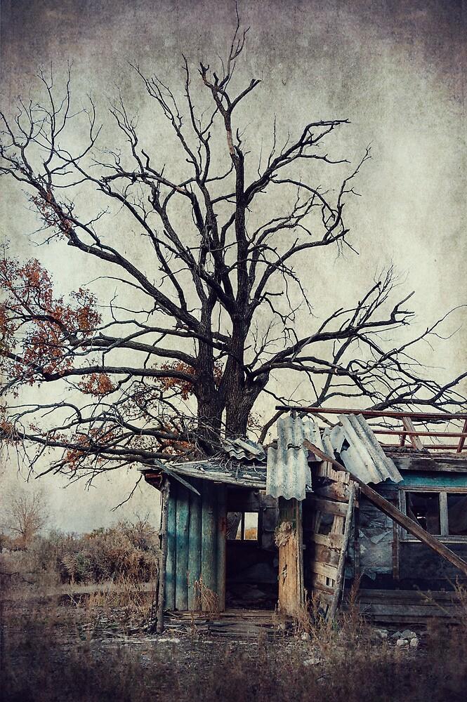Decay Barn by Svetlana Sewell