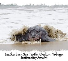 Leatherback Sea Turtle, Grafton, Tobago. 03 by santimanitay