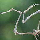 dead frog can dance by yvesrossetti