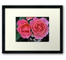 Governor General's Roses  #2 Framed Print