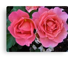 Governor General's Roses  #2 Canvas Print
