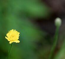 Yellow Flower by Scott Mitchell
