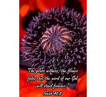 Poppy with Inspiration Photographic Print