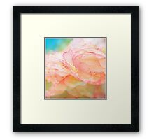 Begonia Love... Framed Print