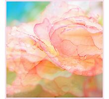 Begonia Love... Photographic Print