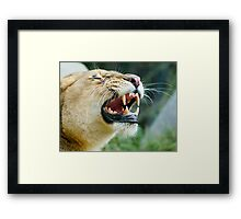 Lion Grin Framed Print