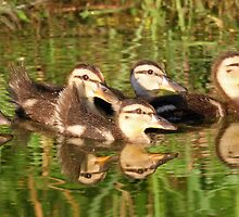 Baby Mallards with reflection by jozi1