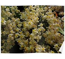 Fluffy Orchids Poster
