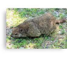 Gregarious Groundhog Canvas Print