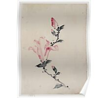 Large pink blossom on a stem with three additional buds 001 Poster