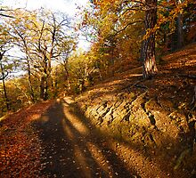 The hot October in Wernigerode by Kirill Mazanik Studio