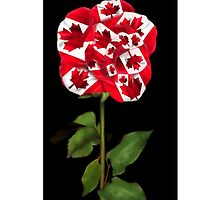 ✿♥‿♥✿CANADIAN PATRIOTIC ROSE IPHONE CASE✿♥‿♥✿ by ╰⊰✿ℒᵒᶹᵉ Bonita✿⊱╮ Lalonde✿⊱╮