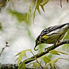 Building a Nest by Ginger  Barritt
