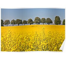 Yellow Field.. [FEATURED] Poster